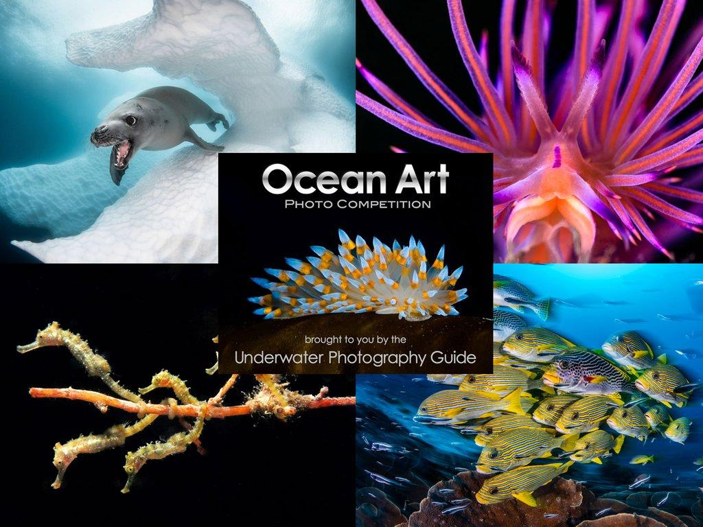 Ocean Art Safe Under the Sea Underwater Photo Competition