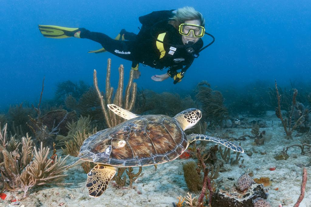 Diver with a young Atlantic green (Chelonia mydas) sea turtle.
