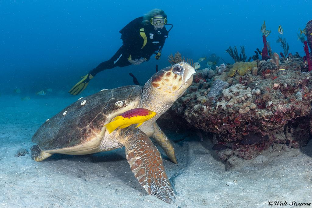 Palm Beach County, Florida Reopens Their Doors to Scuba Divers 1