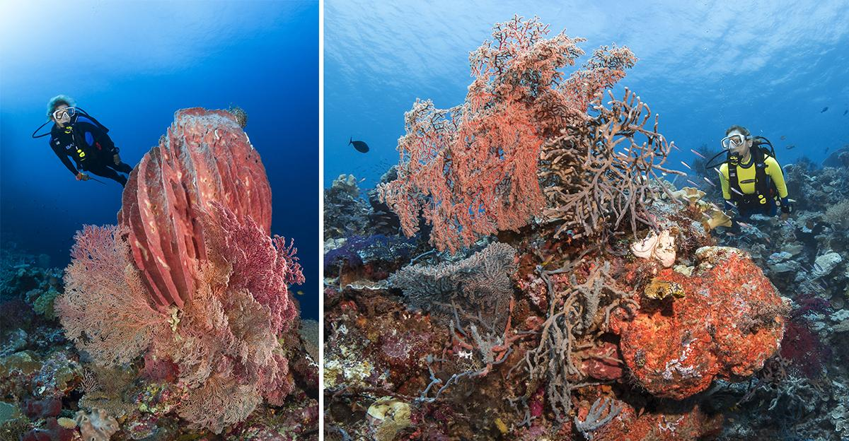 Coral and sponges galore at Blade.