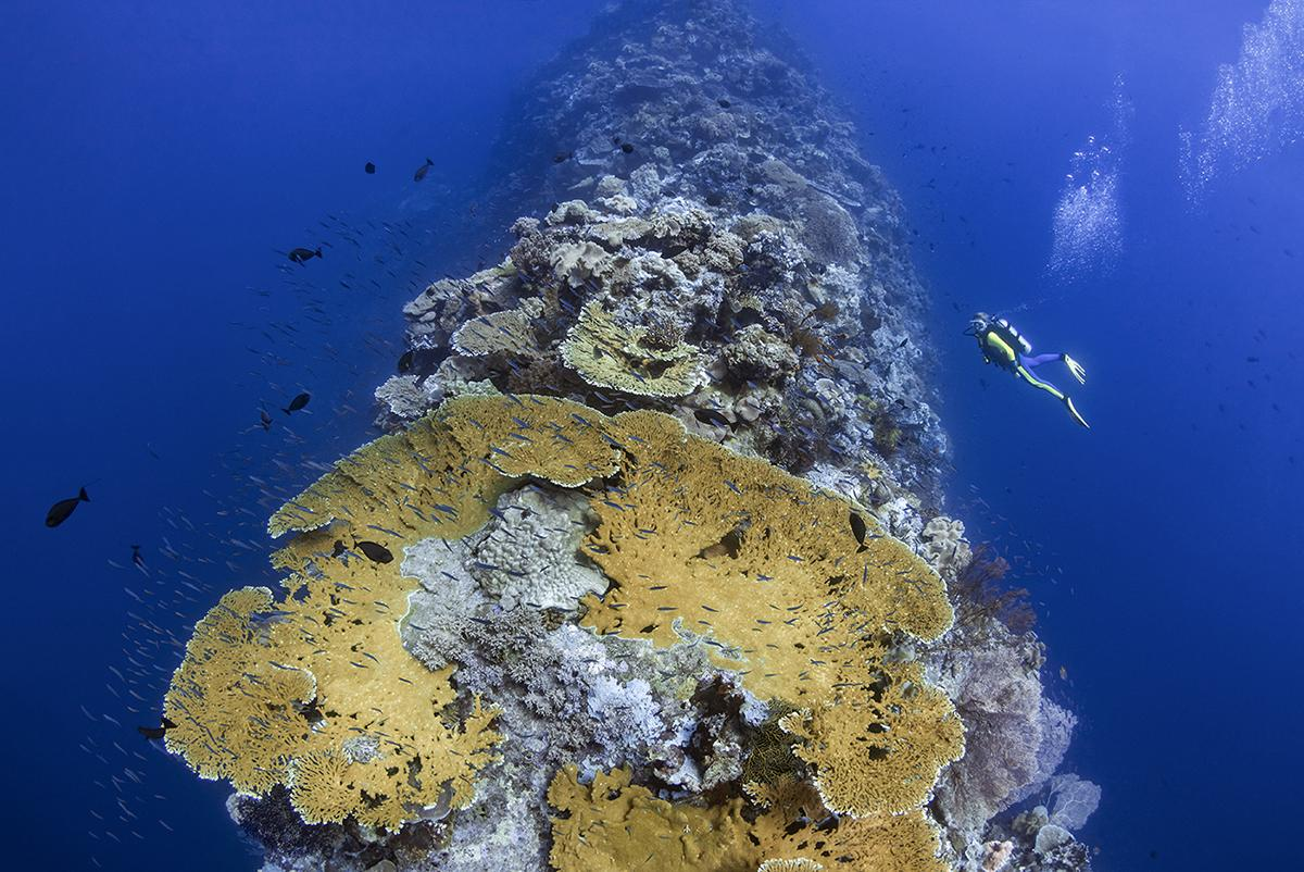 A diver explores the unusual coral formation that is the Blade at Wakatobi, Indonesia.
