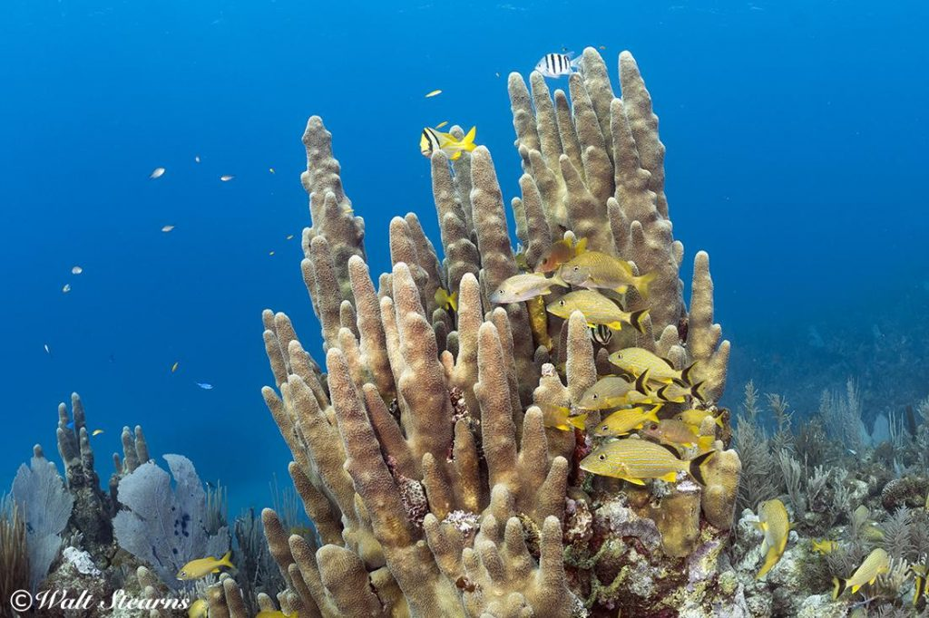Cuba's Jardines de la Reina (Gardens of the Queen) is all about spectacular coral reefs and plentiful marine life.