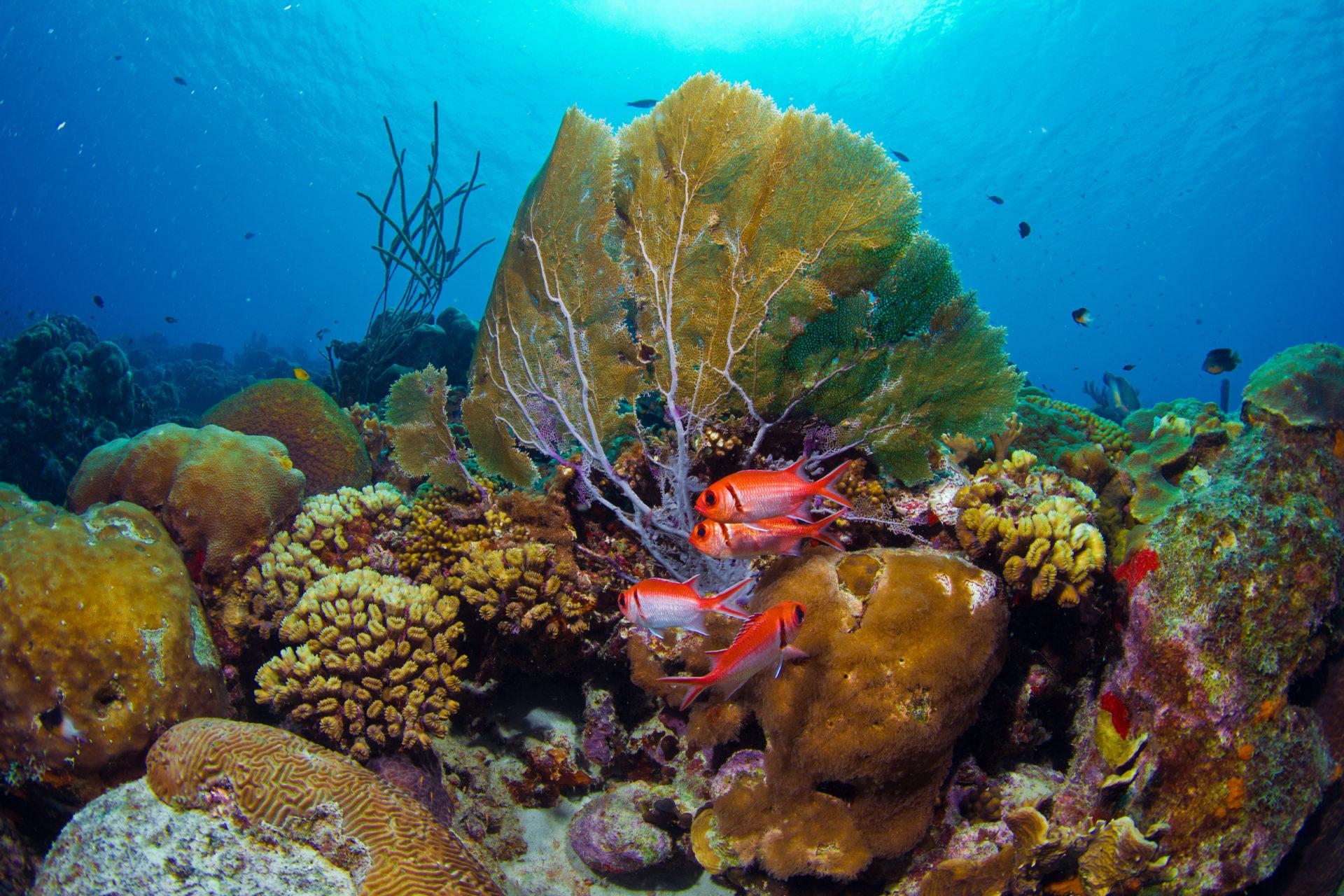 8 Reasons why Buddy Dive Resort is the Best Destination