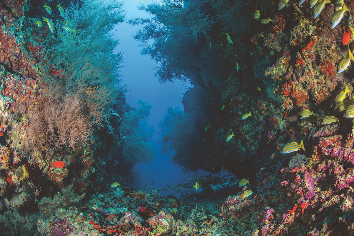 Diving Dhigali's reefs.
