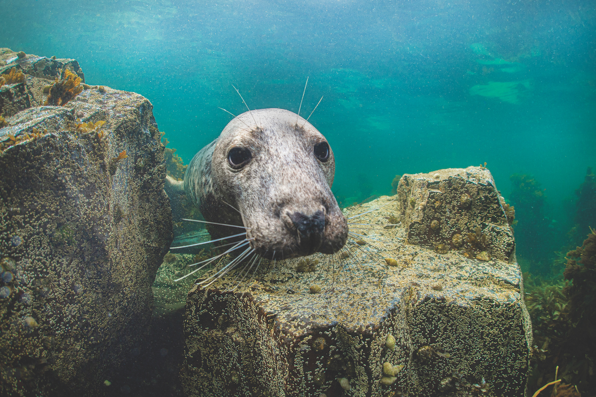 Diving with seals in the UK