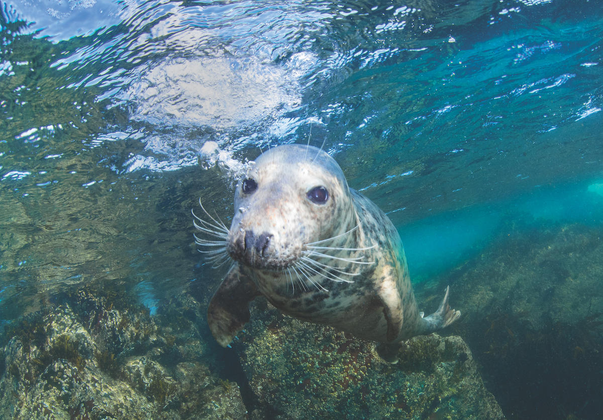Diving with seals UK