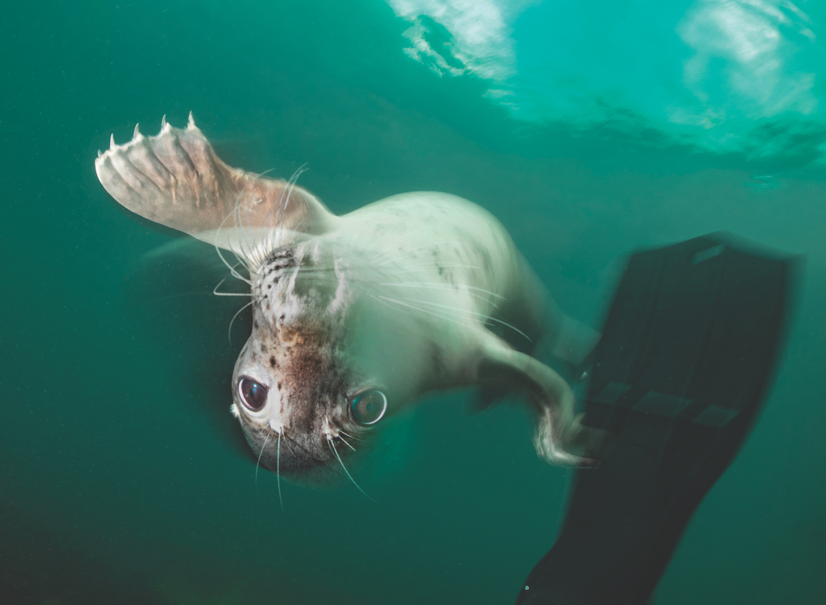 Diving with seals.
